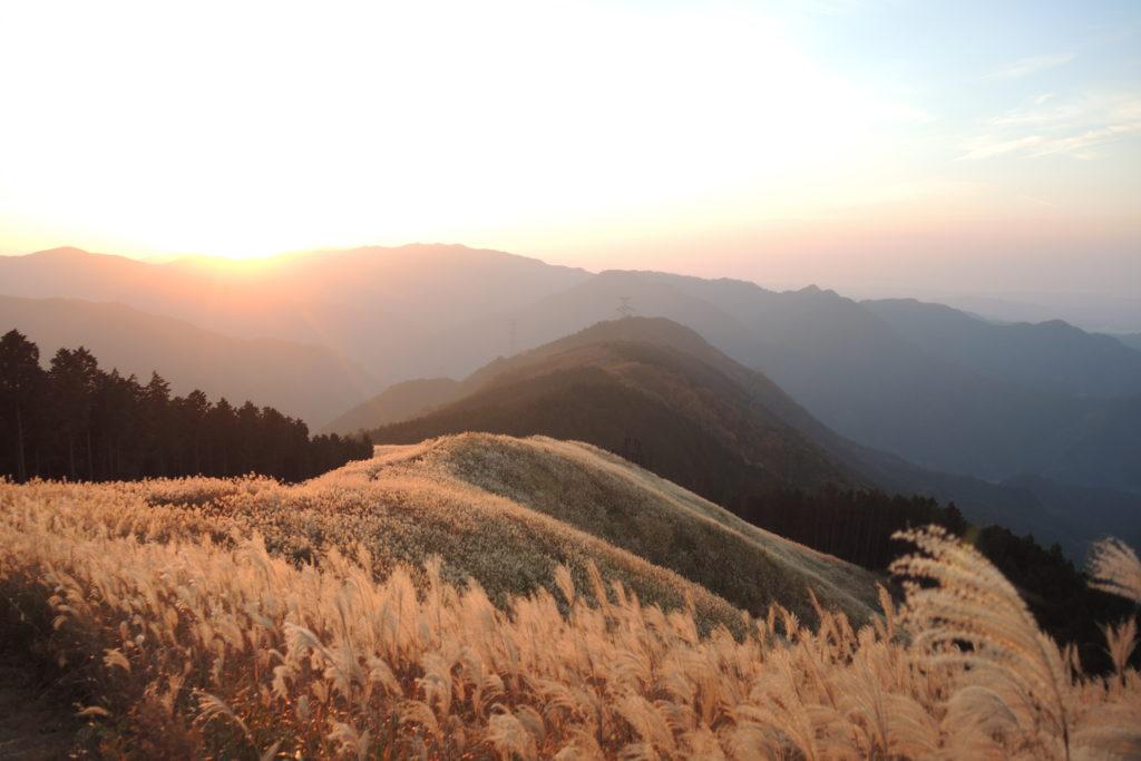 岩湧山 山頂 ススキ